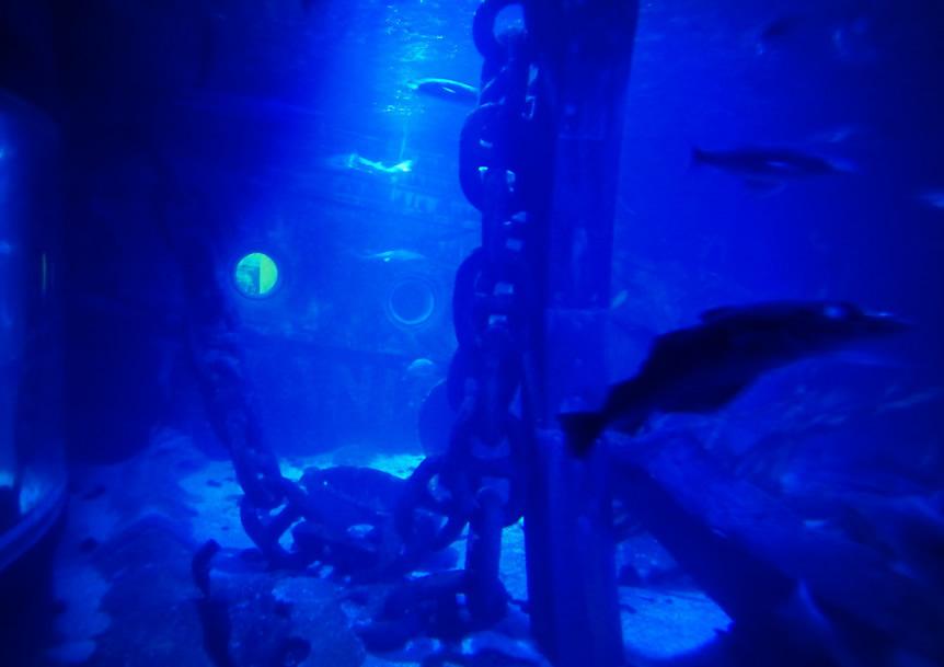 Sealife 5