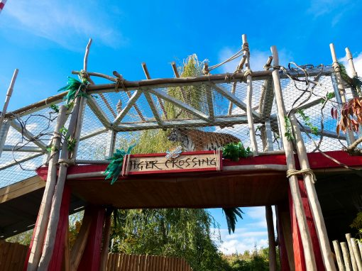 Land of the Tigers at Chessington World of Adventures